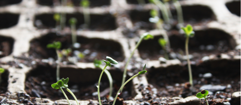 paging dr. greenthumb: six tips to grow your leads